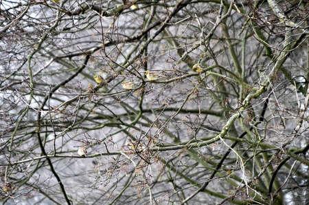 underwood: frozen underwood in a forest