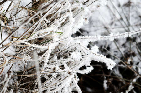 icicles: ice-needles and icicles on plants and frozen grass