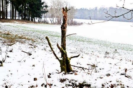 treetrunk: tree-trunk without boughs in winter Stock Photo