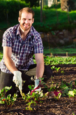 Handsome happy farmer smiling and digging into the vegetable patch garden farm harvesting his produce with a hand spade photo