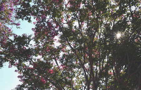 flower tree Stok Fotoğraf