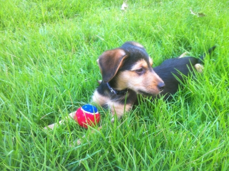 otganimalpets01: A perfect summer day outside.  A tired puppy relaxes in the tall grass with her favorite toy.