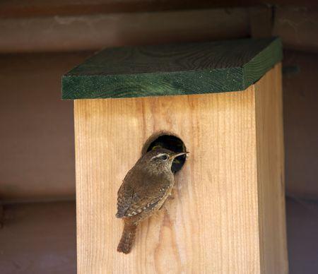 troglodytes: A Wren Feeding Its Young At A Nest Box Stock Photo