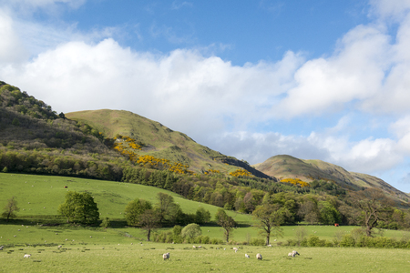 lambing: View of some of the Ochil Hills, Clackmannanshire, Scotland