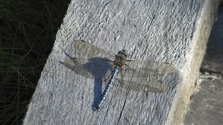 dragon fly: Dragon fly enjoy ones freedom. Stock Photo
