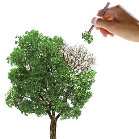 pinzas: Ponga la hoja en el árbol con un par de pinzas Foto de archivo