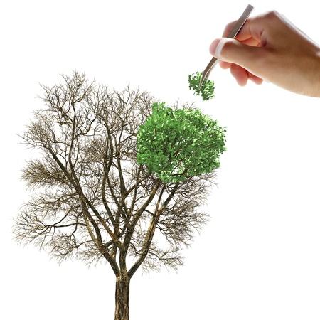 핀셋으로 나무에 잎을 넣어