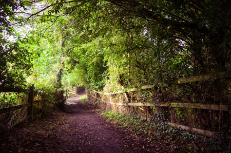 wooded path: Woodland path in Worsbrough, Yorkshire, England