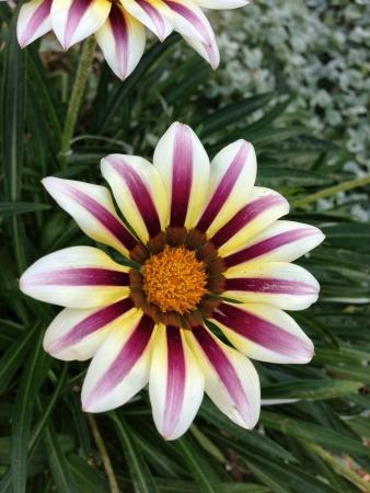 teng: Garden by the bay-flower Stock Photo