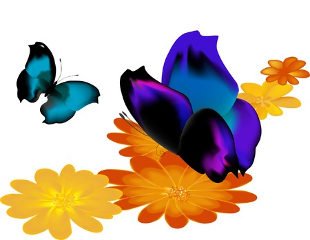 Two butterflies on yellow flowers, one with open wings Vector