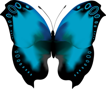 rear wing: Tropical blue iridescent butterfly with open wings. There is a border of concentric ocellus on the wings.