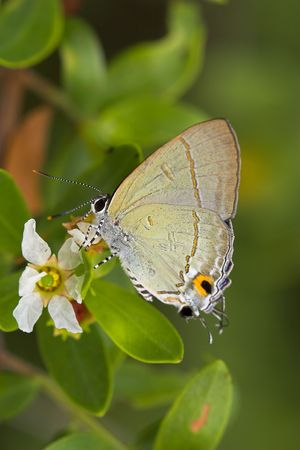 Closeup of a tropical butterfly. Stock Photo - 888428