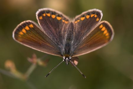 Closeup of a butterfly sitting on a flower. Stock Photo - 890378