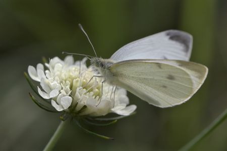 Closeup of a butterfly sitting on a flower. Stock Photo - 890379
