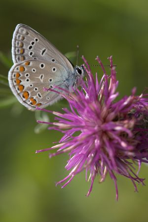 Closeup of a butterfly sitting on a flower. Stock Photo - 890381