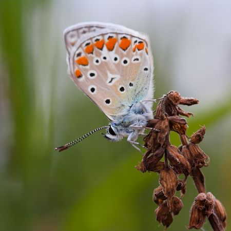 Closeup of a butterfly sitting on a flower. photo
