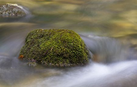 streamlet: Moss-covered rocks in a streamlet.