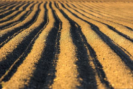 Picture of ploughed field ready for the crop. photo