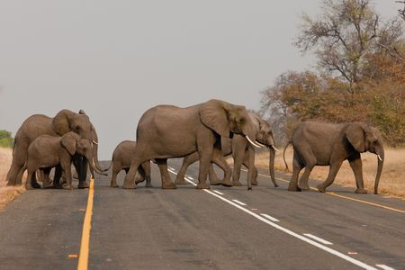 Group of wild elephants in southern Africa. Stock Photo