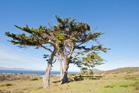 Wild tree at the Cape of Good Hope peninsula in South Africa. Stock Photo - 10162363