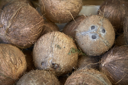 coconut nuts hard hairy shell brown many