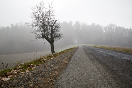 frozen trees winter street hoarfrost white frost
