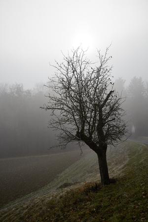 foggy tree autumn sunlight scenic