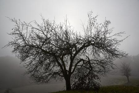 gloomy winter sun soon isolated black tree