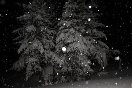 snowflakes night tree snow cold white beautiful