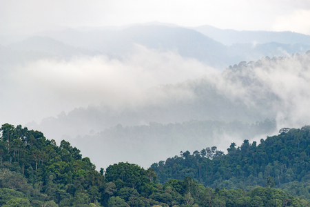 Layers of high mountain, foggy on rain forest.