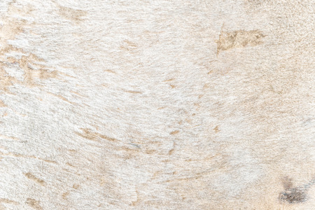 cow skin: Traces on fragment of cow skin or cowhide, close up leather textured.