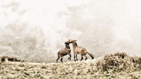 buckskin horse: Two young horses playing with each other at high mountain in foggy background. Painting style retouching.