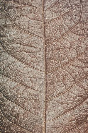 Struktur des trockenen Blattbeschaffenheitshintergrundes des Schmutzes, Makro. Standard-Bild - 62465403