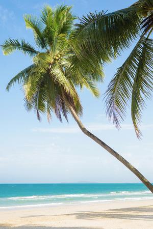 Palmen mit Kokosnuss am schönen tropischen Strand, am weißen Sand und am blauen Himmel. Standard-Bild - 62466069