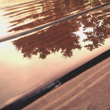 Silhouette Baum Reflexion mit nassem Wasser auf Holzbrett in regnerischen Tag Standard-Bild - 62465005