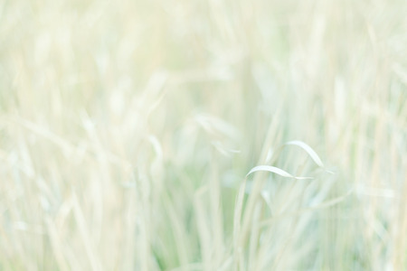 Selective soft focus meadow on sweet vintage colour filter. Abstract background.
