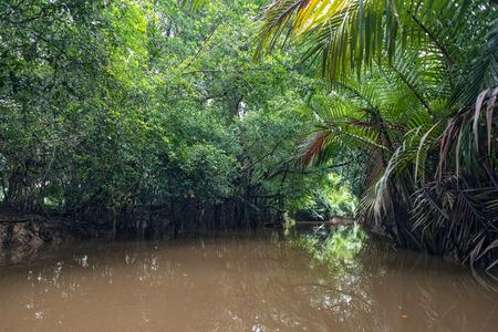 Manier om te kajakken door weelderige groene jungle en wilde mangrovemoeras bij Klong Sung Nae, Little Amazon, Phang Nga - Thailand