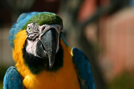Macaw near the beach in Ventura California Stock Photo