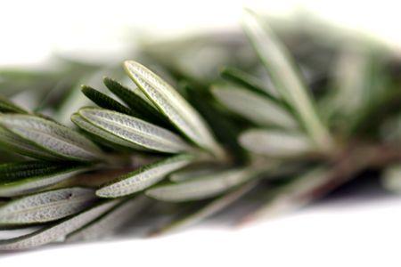 Fresh green herb rosemary on white background. photo
