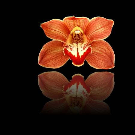 Red and orange orchid on black background with reflection. Reklamní fotografie - 4889083