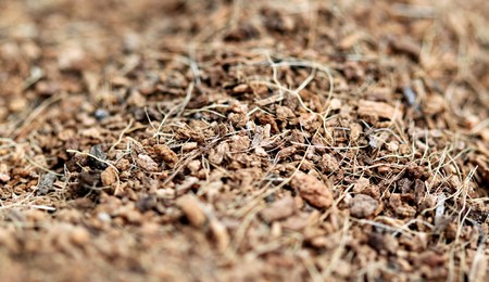 bark mulch: close up of brown mulch good for use as a background Stock Photo