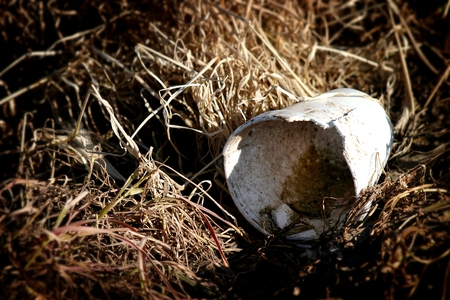A garbage cup in old dead grass.