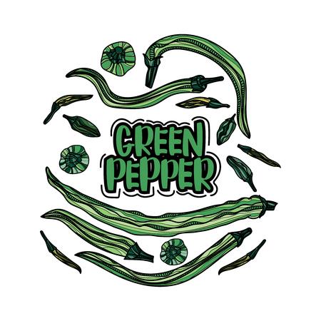 chili sauce: Hand drawn green pepper print illustration.