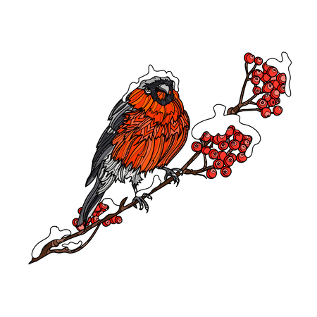 Bullfinch on the snow-covered branch of mountain ash. Typography design elements for prints, cards, posters, products packaging, branding.