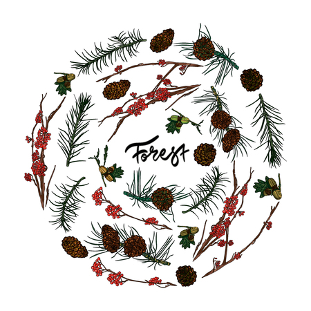 Mountain ash branches, pine cones, acorns and fir-tree branches. Hand drawn inscription - forest Vector illustration. Typography design elements for prints, cards, posters. Illustration