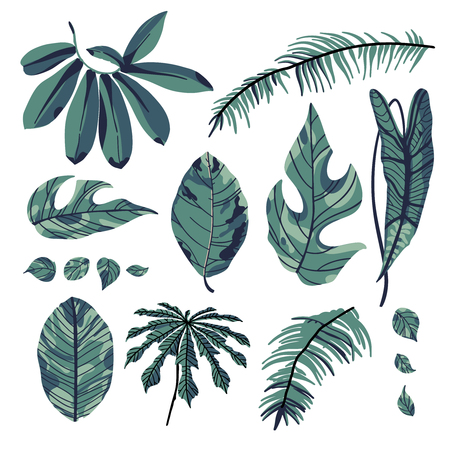 Tropical palm leaves, green jungle leaf isolated on white background. Vector illustration in trendy style. Ilustração
