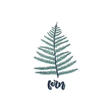 Fern leaf isolated on white background with caption - fern. Vector illustration in trendy style.