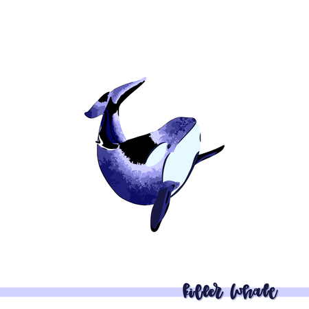 Vector illustration of hand drawn killer whale isolated on white backround. Perfect design elements, marine animal illustration Ilustração