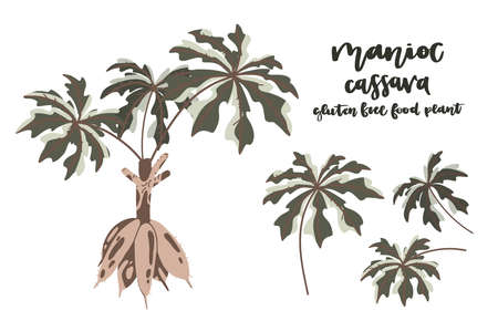 Hand drawn Cassava flat illustration. Botanical drawing of manioc, yuca or Brazilian arrowroot. Vegan and healthy Agricultural plant. Great for packaging, label, icon.