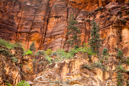 narrows: Trees High on Sandstone Walls, The Narrows, Zion National Park  Stock Photo